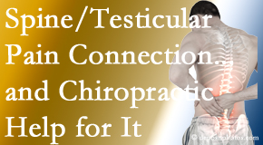 Gormish Chiropractic & Rehabilitation shares recent research on the connection of testicular pain to the spine and how chiropractic care helps its relief.